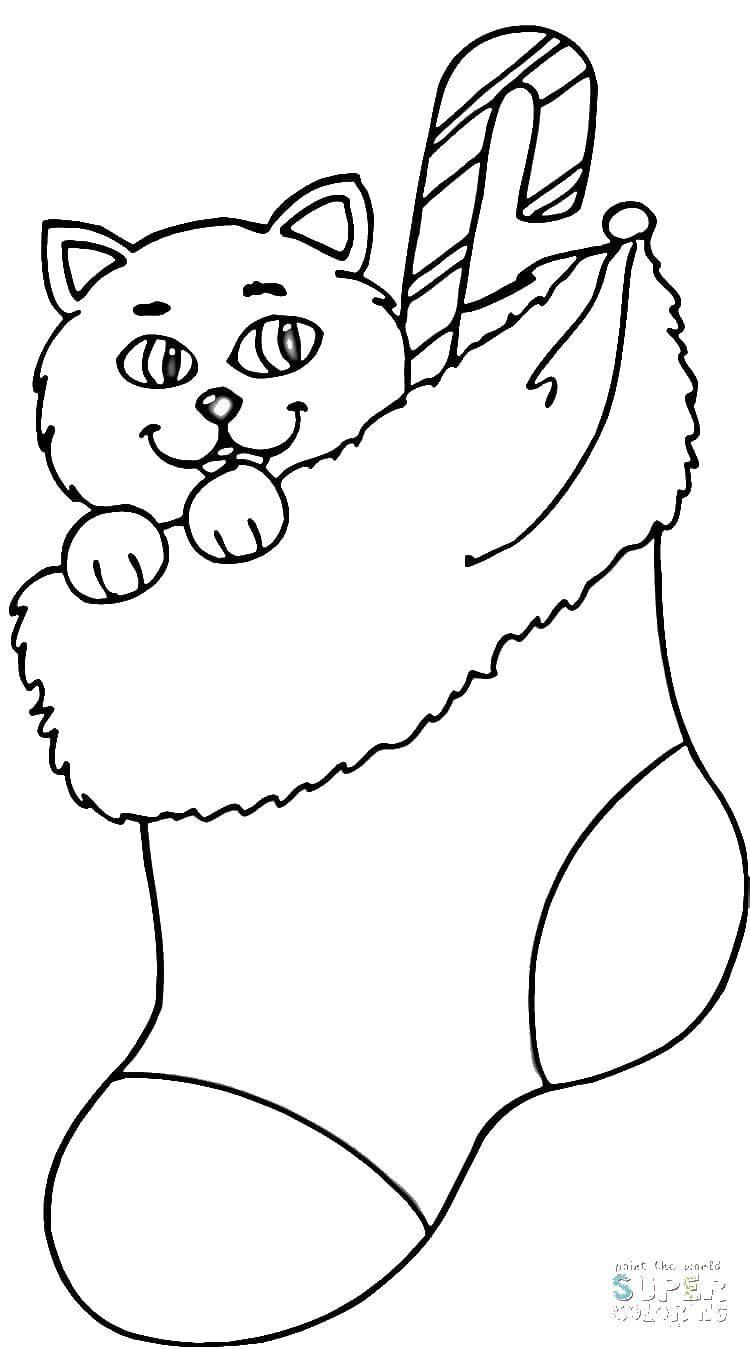 раскраски котенок раскраска котенок в носке рождество
