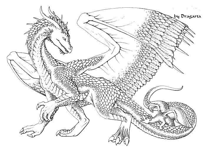 Раскраска Большой и маленький дракон Скачать дракон, змей, усы, хвост.  Распечатать ,Драконы,