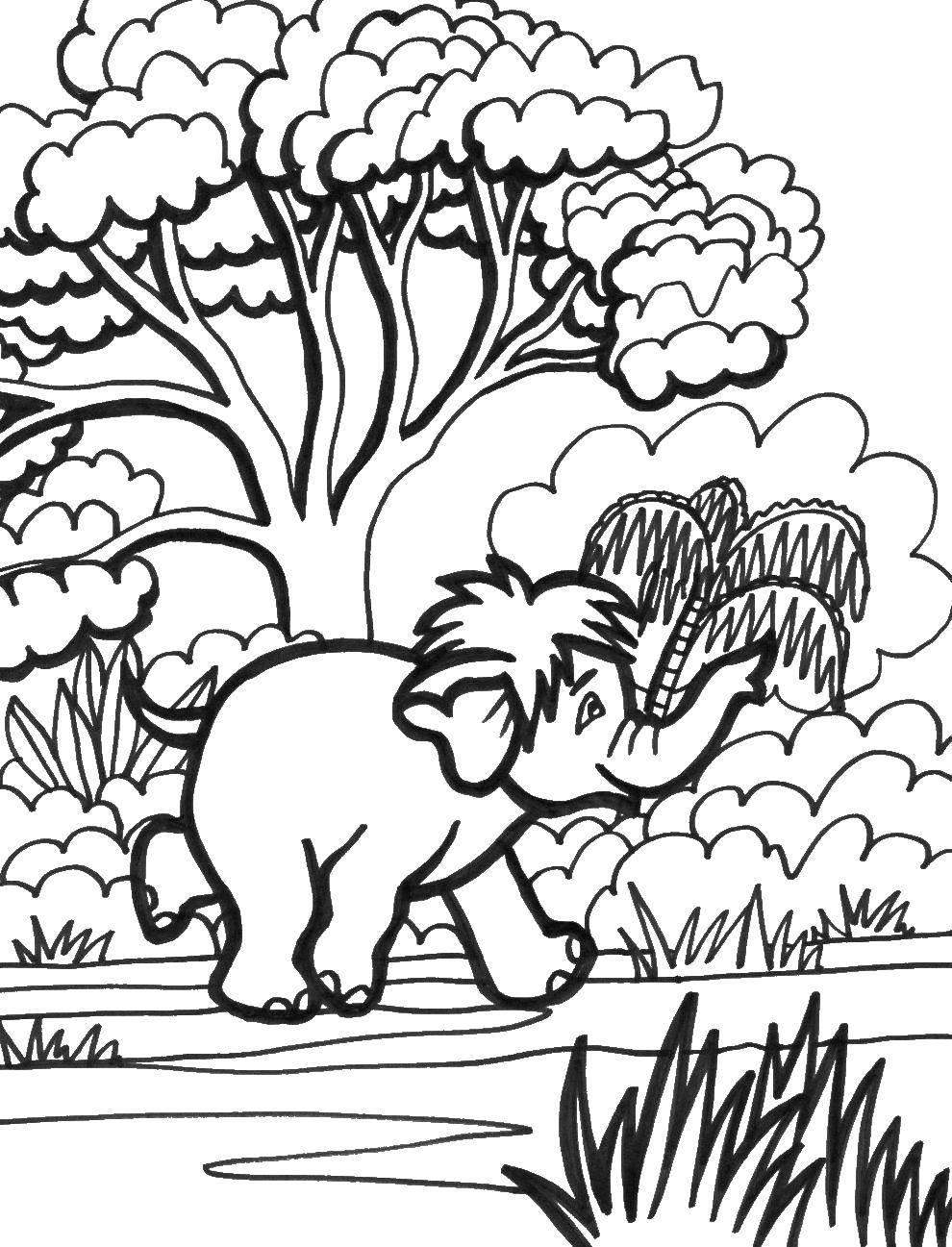 Раскраска Мамонтенок бежит по лесу Скачать мамонт.  Распечатать ,животные,