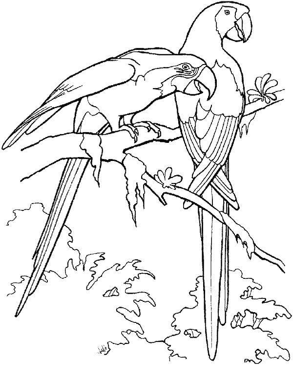 Раскраска птицы Скачать ,рождество, гринч,.  Распечатать