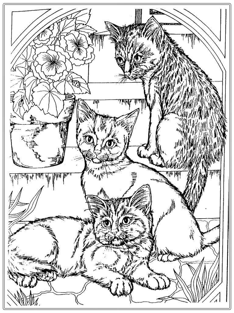 Раскраска Котята на лестнице. Скачать котята, кошки.  Распечатать ,Винкс,