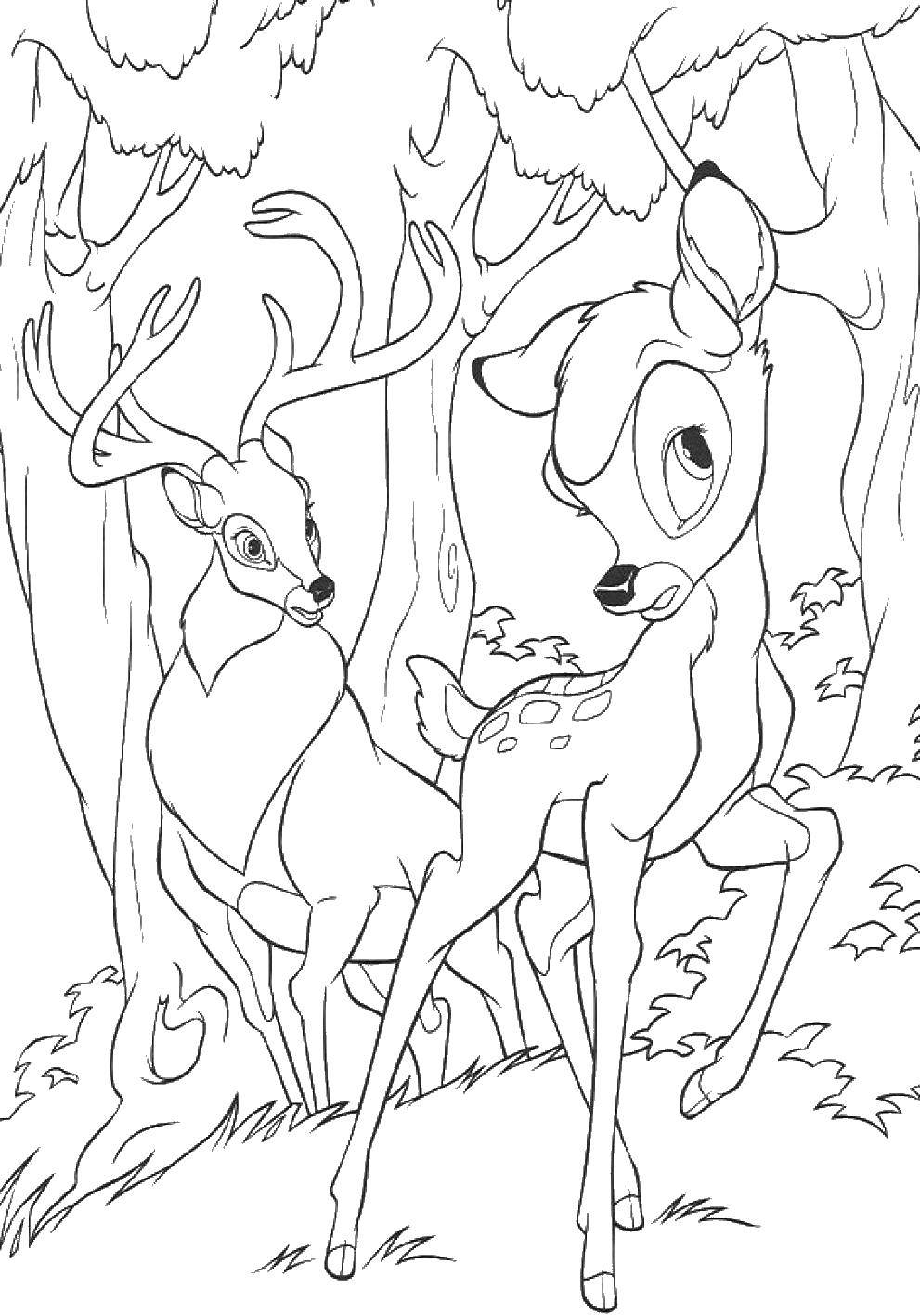 Раскраска Олени Скачать Диснеевские мультфильмы, раскраски, Бэмби, олени.  Распечатать ,Диснеевские раскраски,