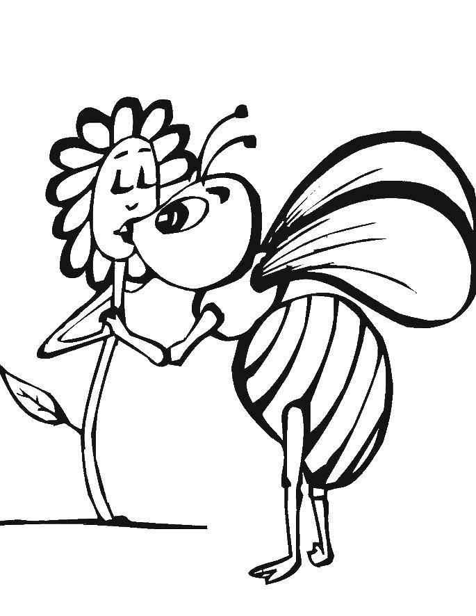 Раскраска Пчёлка любит цветочек Скачать Цветы, пчелка.  Распечатать ,Цветы,