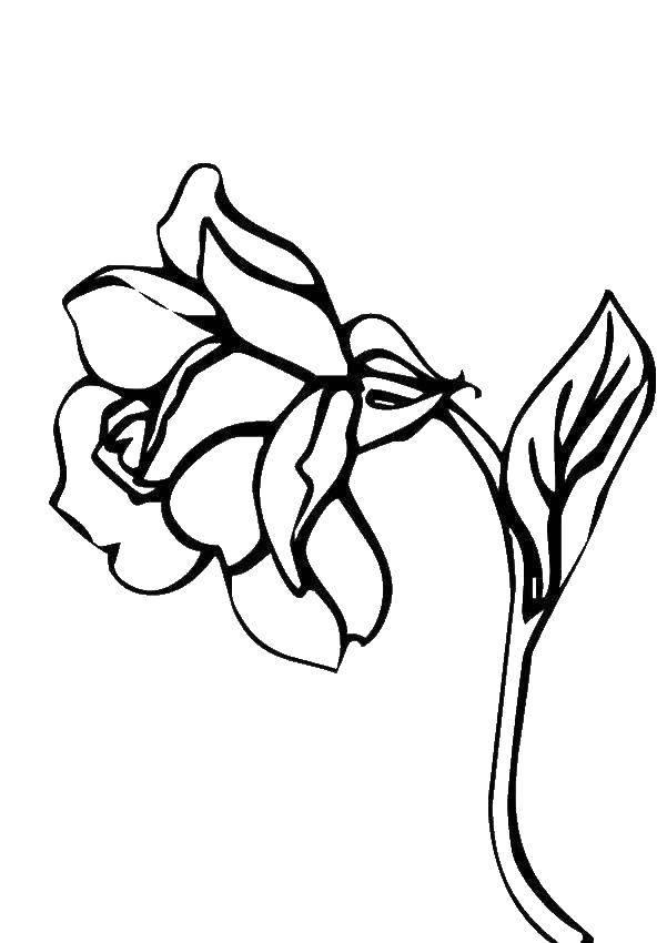 Раскраска цветы Скачать ,Поиск предметов,.  Распечатать