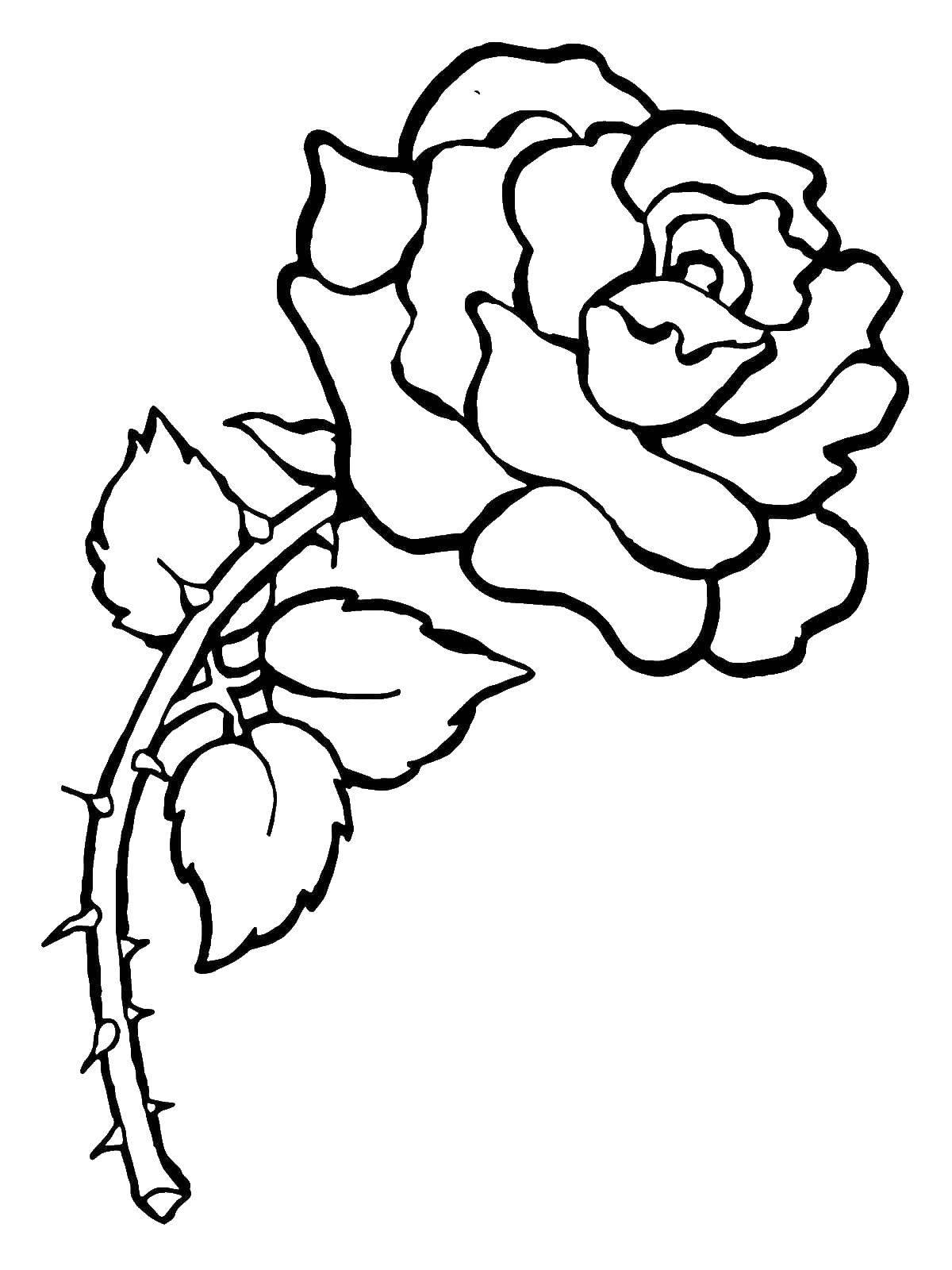 Раскраска Красивая роза с шипами Скачать Цветы, розы.  Распечатать ,Цветы,
