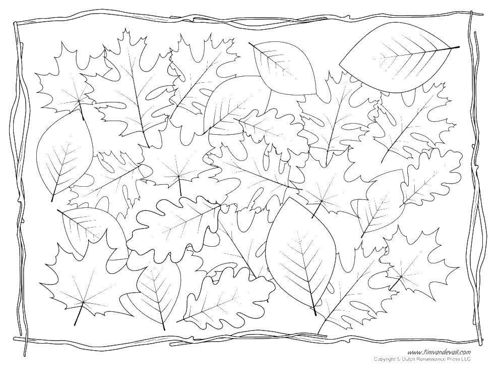 Раскраска листья Скачать лисица, глаза, магазин.  Распечатать ,мой маленький зоомаганиз,