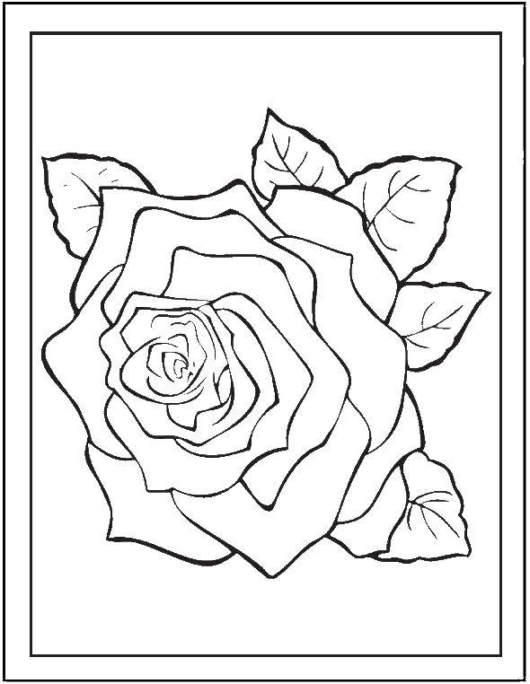 Раскраска Одинокая роза Скачать Цветы, розы.  Распечатать ,Цветы,