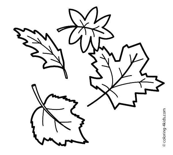 Раскраска Контуры листьев Скачать Властелин колец.  Распечатать ,властелин колец,