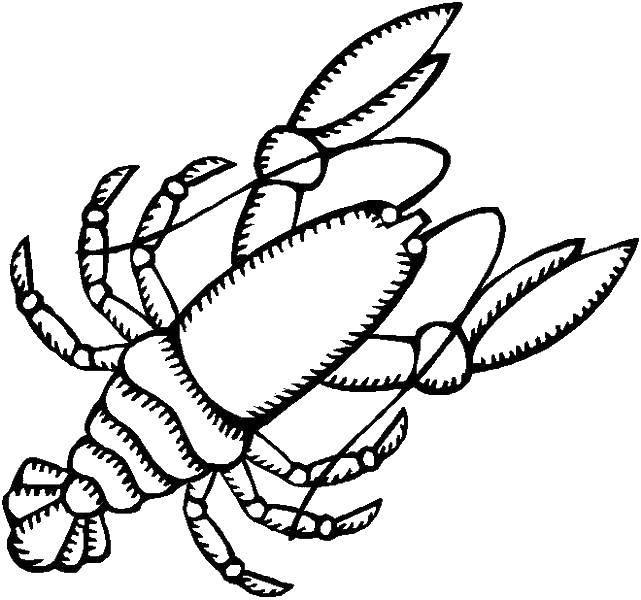 Раскраска Рак крупная группа членистоногих Скачать рак, морское.  Распечатать ,морское,