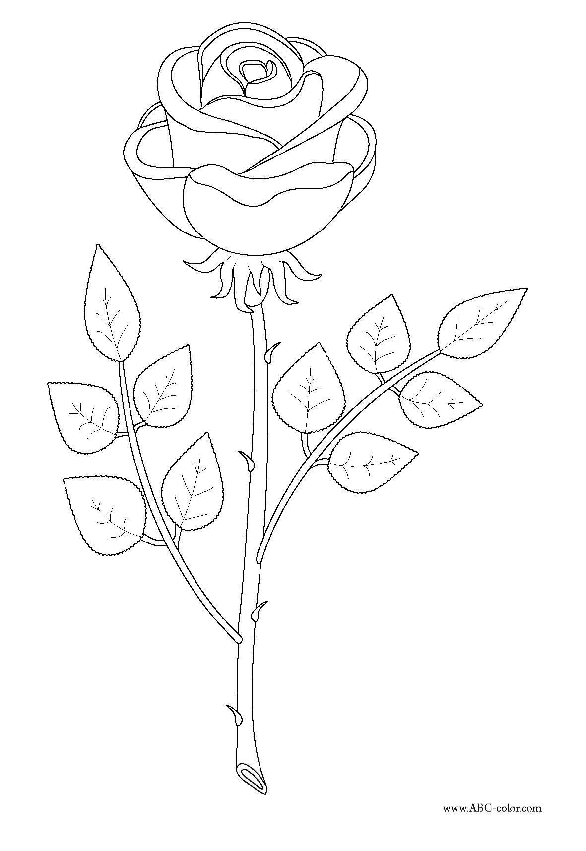 Раскраска Рисунок роза с шипами Скачать Роза.  Распечатать ,домашние животные,