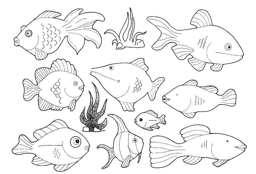 Раскраска Рыбки в море Скачать морское, море, рыбки.  Распечатать ,морское,