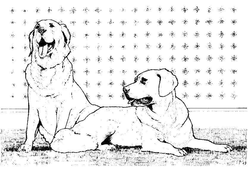 Раскраска собаки Скачать йога, девушка, узоры.  Распечатать ,йога,