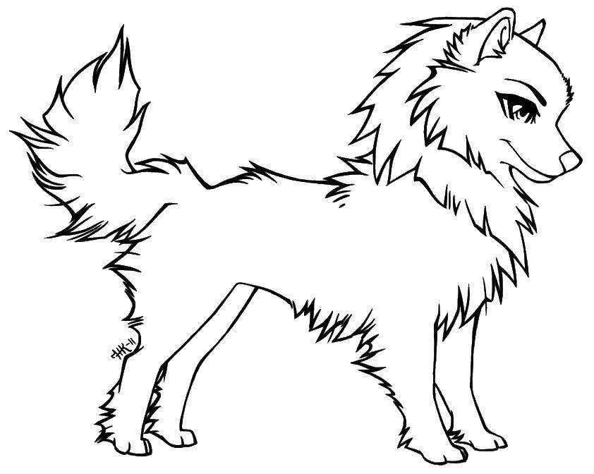 Раскраска Красивая собака Скачать животные, собаки, четвероногие.  Распечатать ,Животные,
