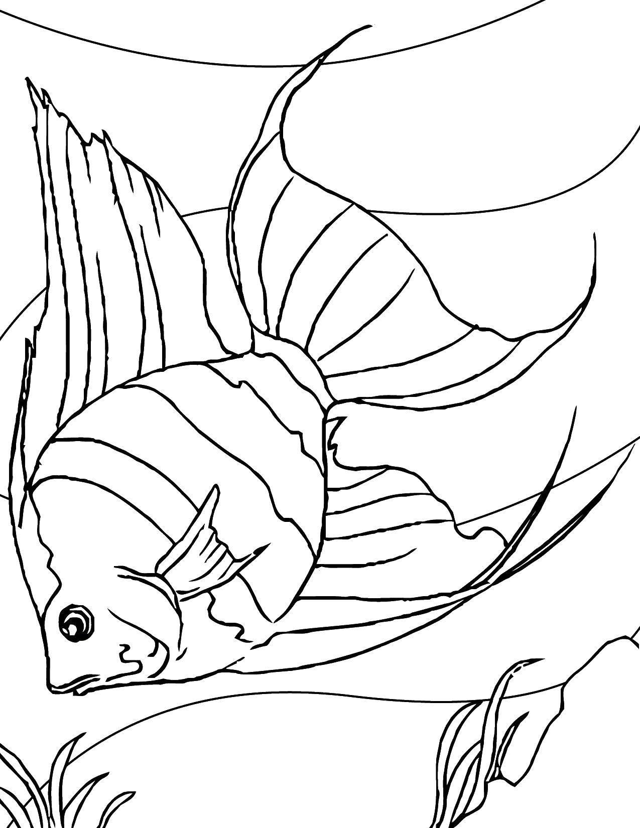 Раскраска Рыба с большими плавниками. Скачать рыба, плавник, хвост.  Распечатать ,рыбы,