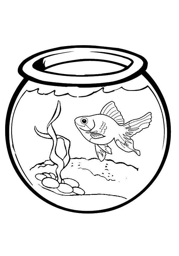 Раскраска золотая рыбка Скачать ,аквариум, рыбы, водоросли,.  Распечатать