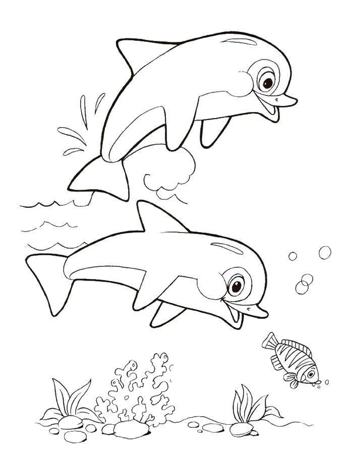 Раскраска дельфин Скачать Персонаж из мультфильма, Спанч Боб, Губка Боб, Планктон.  Распечатать ,Персонаж из мультфильма,