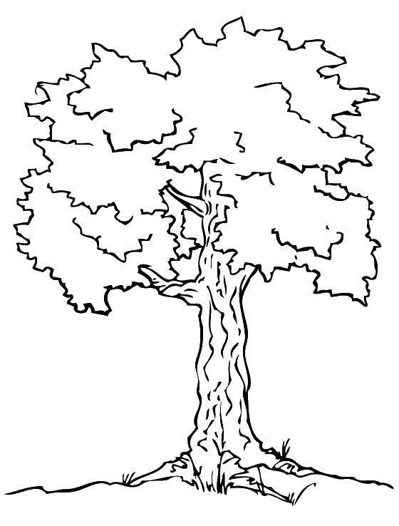 Раскраска Контур дерева Скачать достопримечательности, Париж, Эйфелева башня.  Распечатать ,раскраски,