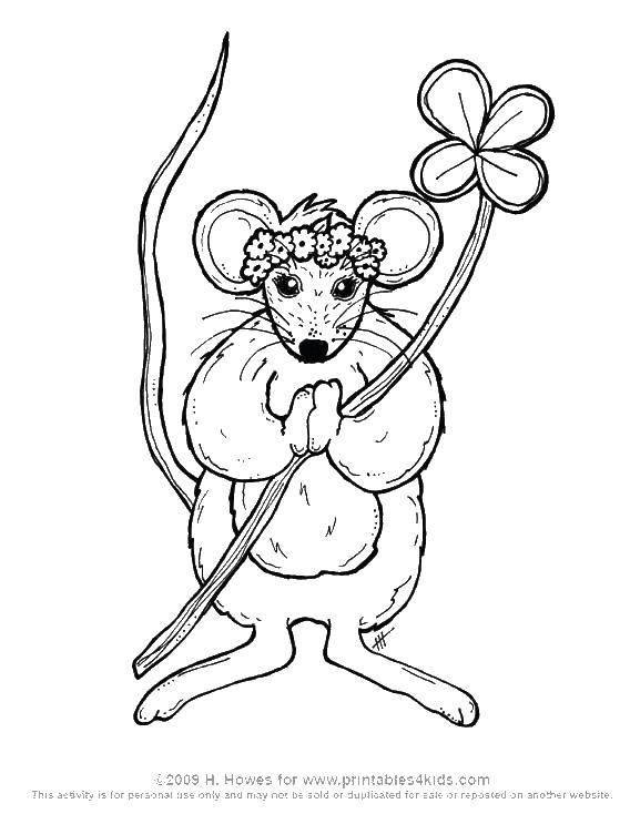 Раскраска Красивая мышка Скачать Животные, мышка.  Распечатать ,Животные,