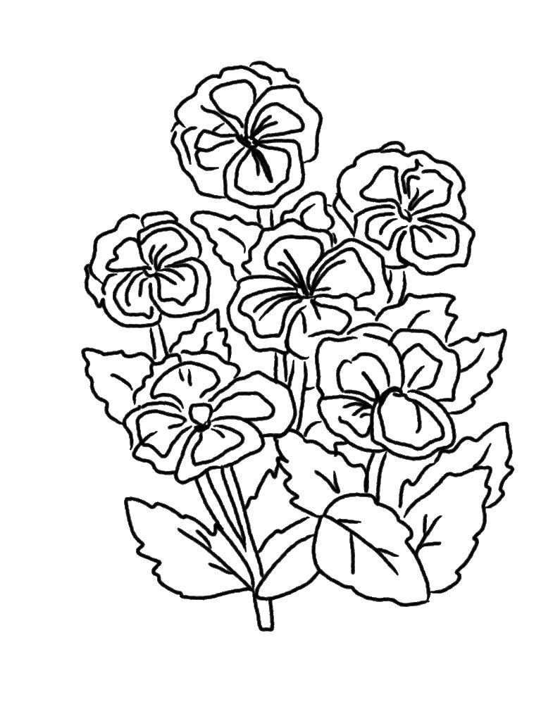 Раскраска Много анютиных глазок. Скачать Цветы.  Распечатать ,цветы,