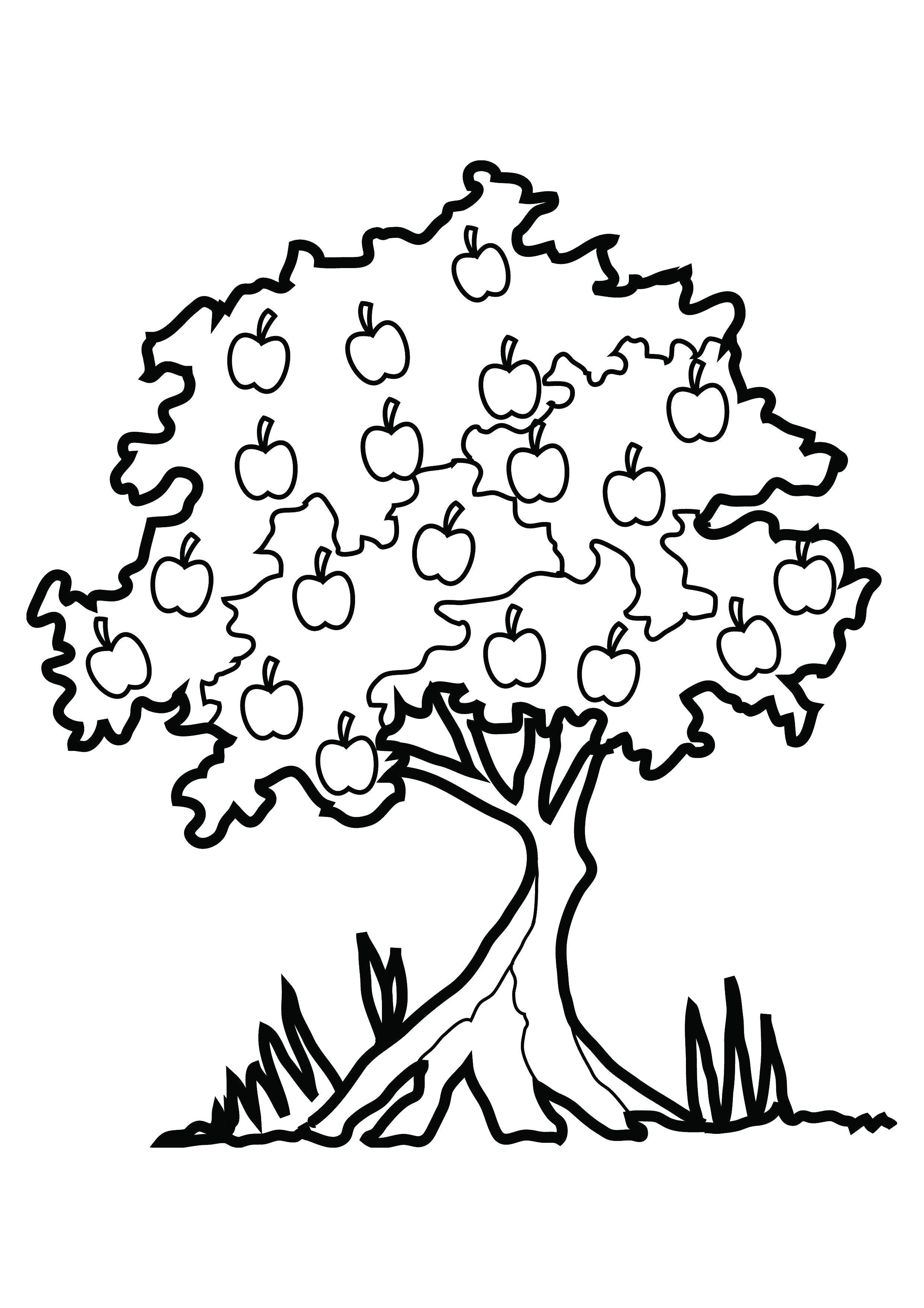 Раскраска Много яблок. Скачать Деревья.  Распечатать ,дерево,