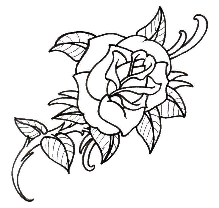 Раскраска Раскрытая роза. Скачать Цветы, розы.  Распечатать ,Контуры розы,