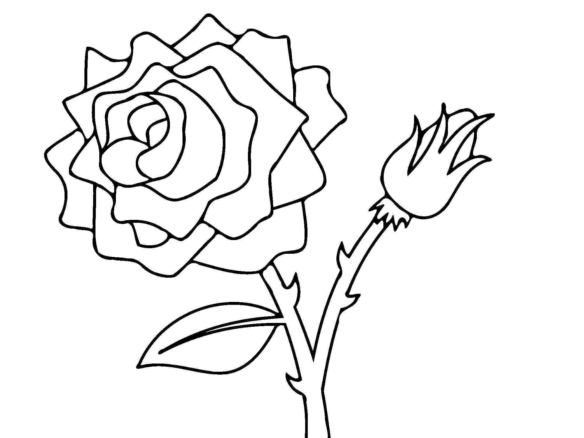 Раскраска Роза и бутончик. Скачать Цветы, розы.  Распечатать ,Контуры розы,