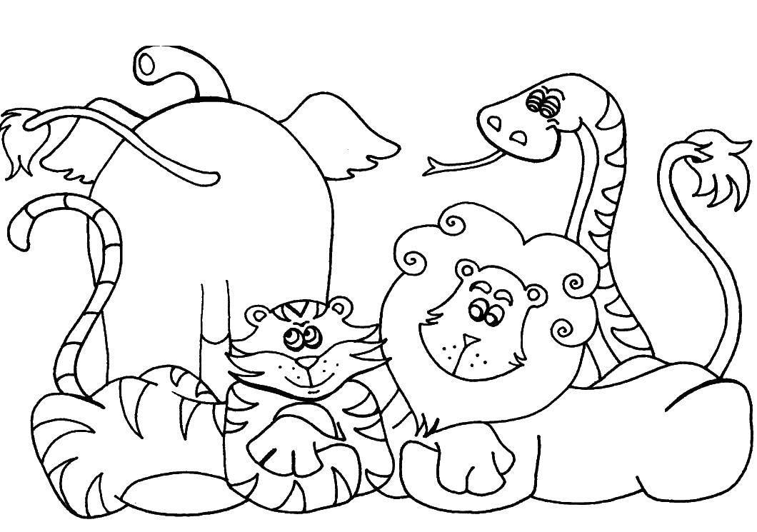 Раскраска Слон, тигр, лев и змейка отдыхают вместе Скачать Животные, слоненок, тигр, лев, змея.  Распечатать ,животные,