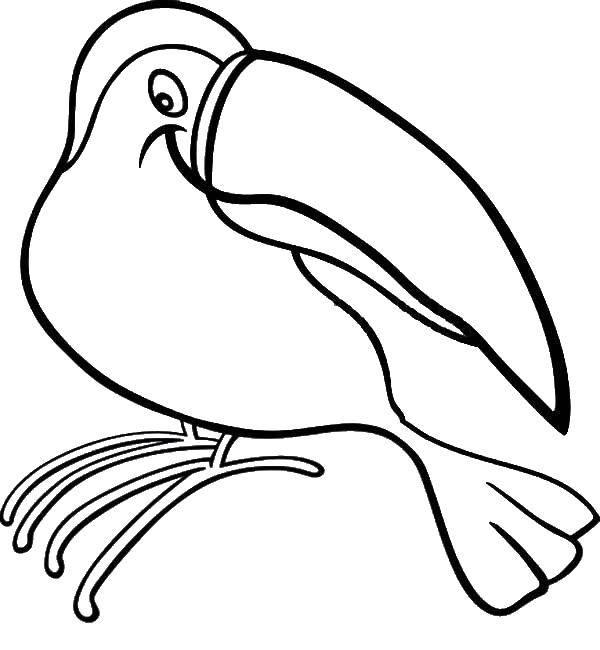 Раскраска Тукан с большим клювом. Скачать тукан, клюв, цветы.  Распечатать ,птицы,