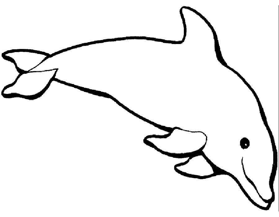 Название: Раскраска Дельфин любит плавать. Категория: дельфин. Теги: Подводный мир, дельфин.
