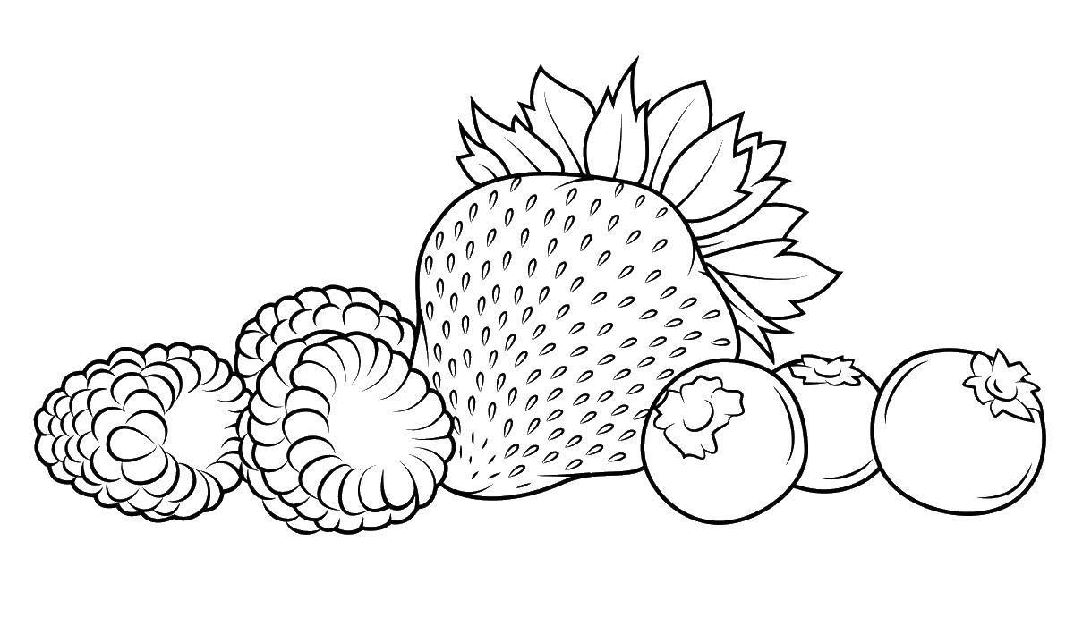 Раскраска ягоды Скачать патрик, спанч боб.  Распечатать ,Спанч Боб,