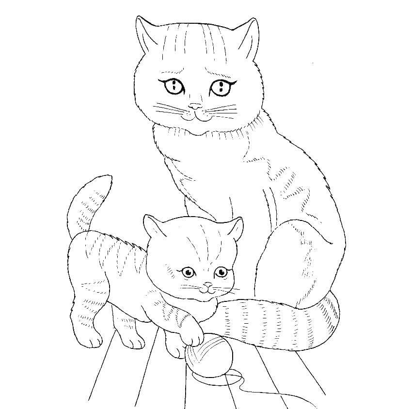 Раскраска Кошка и котенок с клубком ниток Скачать кошка, котенок, клубок.  Распечатать ,котики,