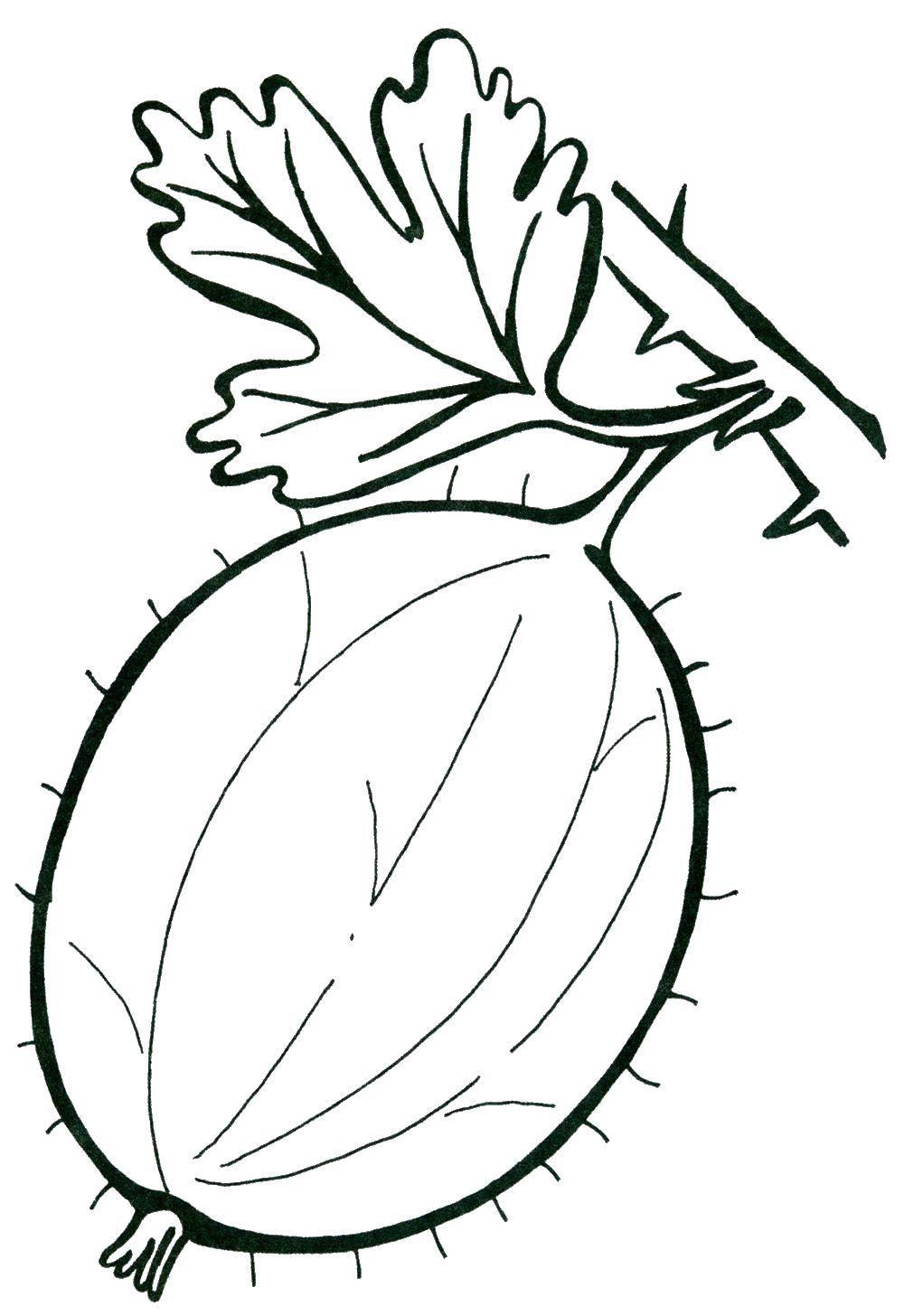 Раскраска Мохнатый крыжовник Скачать Ягоды.  Распечатать ,ягоды,