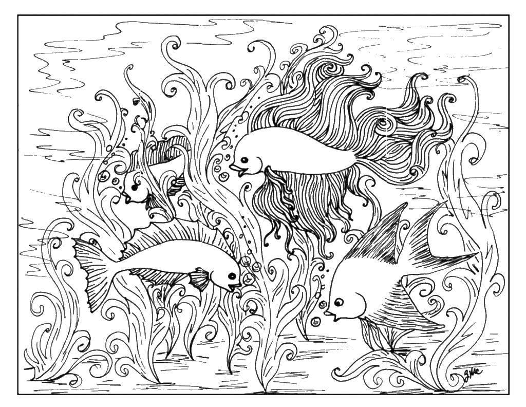 Раскраска Рыбки у водорослей. Скачать рыбы, узоры, водоросли.  Распечатать ,рыбы,