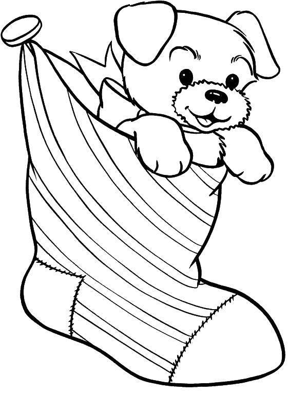 Раскраска Щенок с бантиком в носке. Скачать щенок, носок, бантик.  Распечатать ,Рождество,