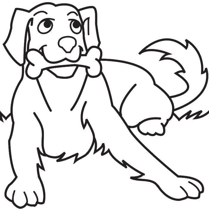 Раскраска Собака с костью Скачать собака, кость, хвост.  Распечатать ,собаки,