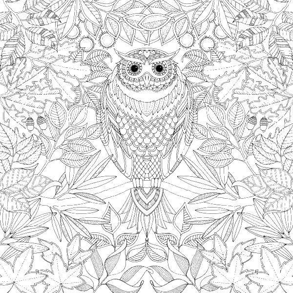 Раскраска Сова и листва Скачать совы, антистресс, узорчики, листья.  Распечатать ,раскраски,