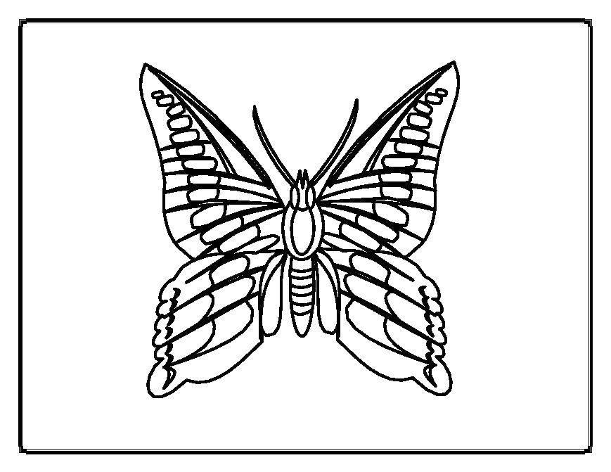 Раскраска бабочки Скачать пони, радуга, для девочек.  Распечатать ,Пони,