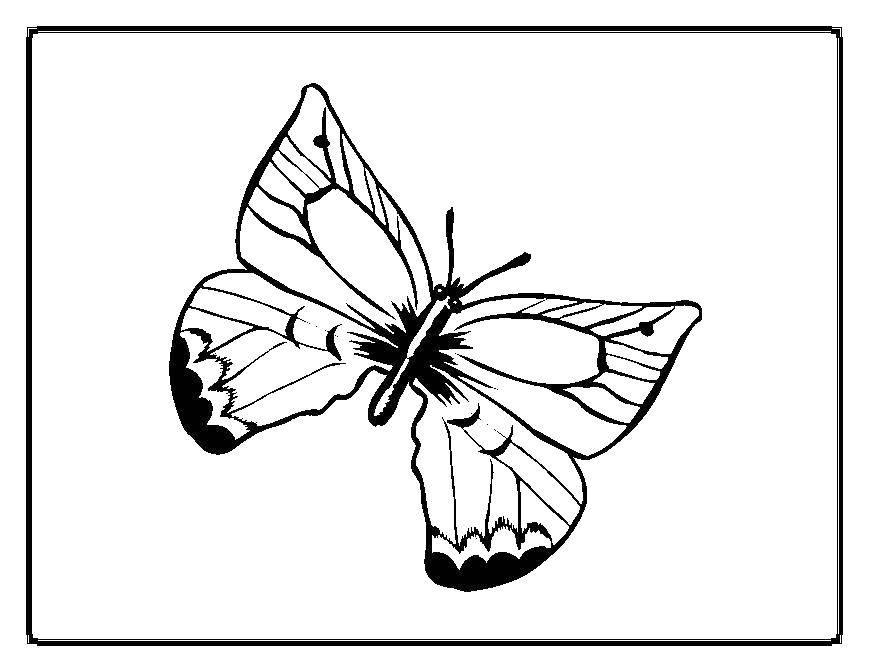 Раскраска бабочки Скачать Алмаз.  Распечатать ,кольцо,