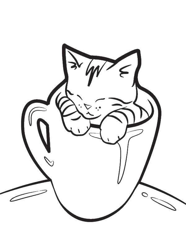 Раскраска Котенок в кружке Скачать коты, котята, кошки.  Распечатать ,Коты и котята,