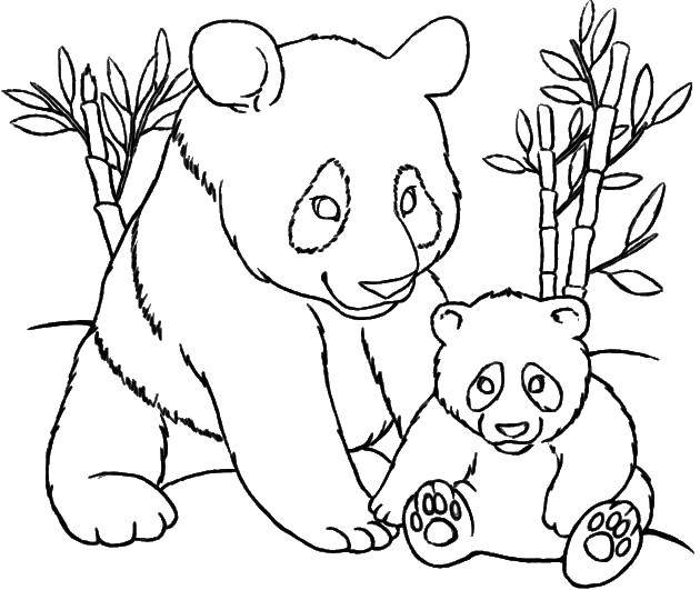 Раскраска Животные Скачать английский алфавит, буквы, L.  Распечатать ,Английский алфавит,