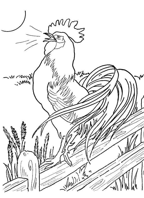 Раскраска птицы Скачать мишка, заяц, керлинг.  Распечатать ,олимпийские игры,