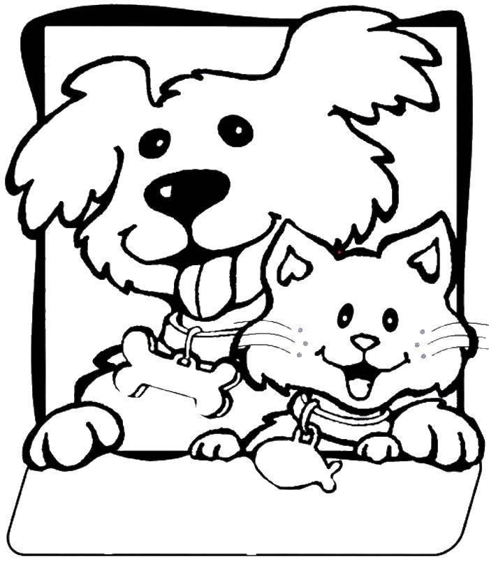 Раскраска Щеночек и котёнок в ошейниках. Скачать Животные, котёнок, щенок.  Распечатать ,Животные,