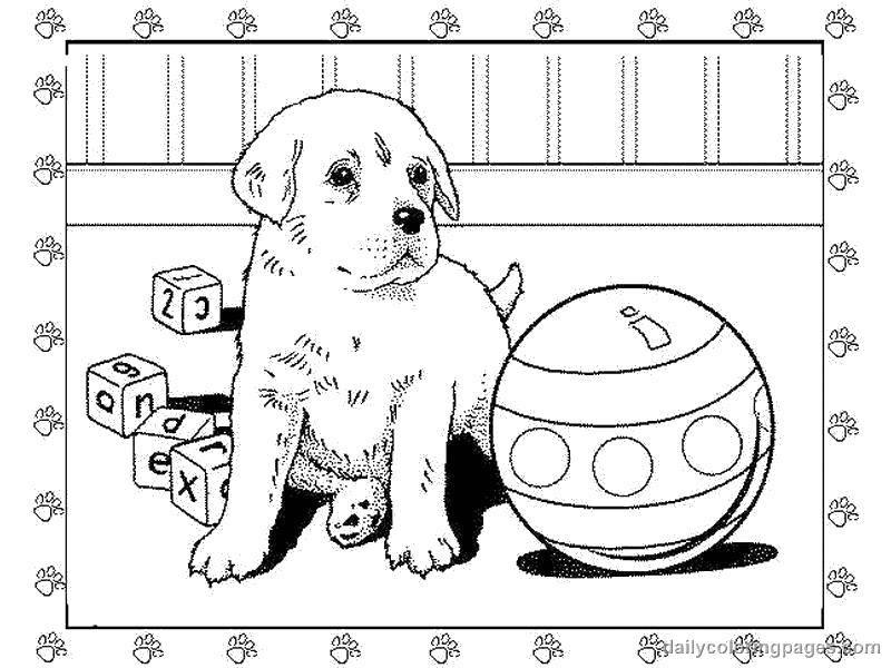 Раскраска Щеночек с игрушками. Скачать Животные, собака.  Распечатать ,Животные,