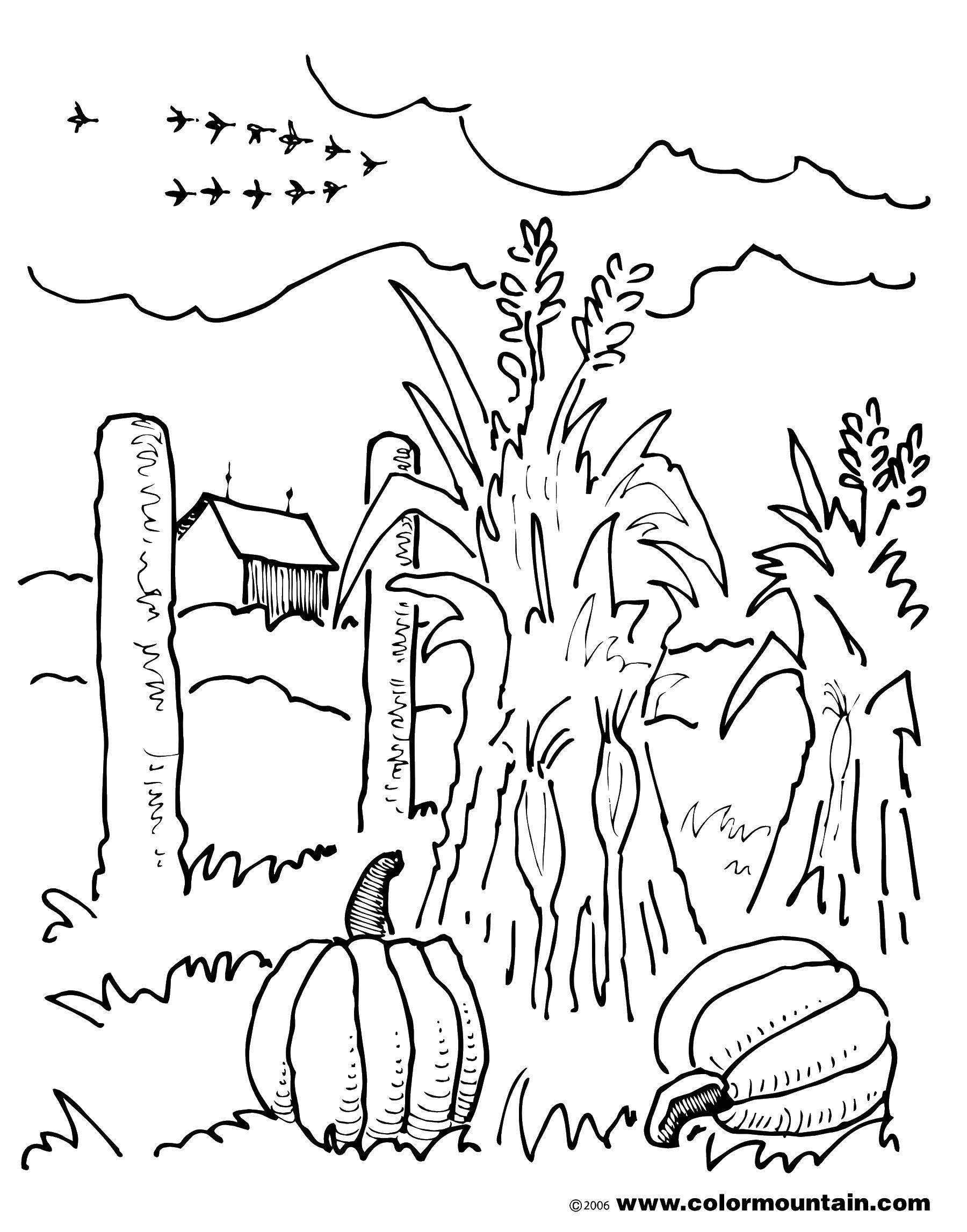 Раскраска Сельское поле у фермы Скачать ,Ферма,.  Распечатать