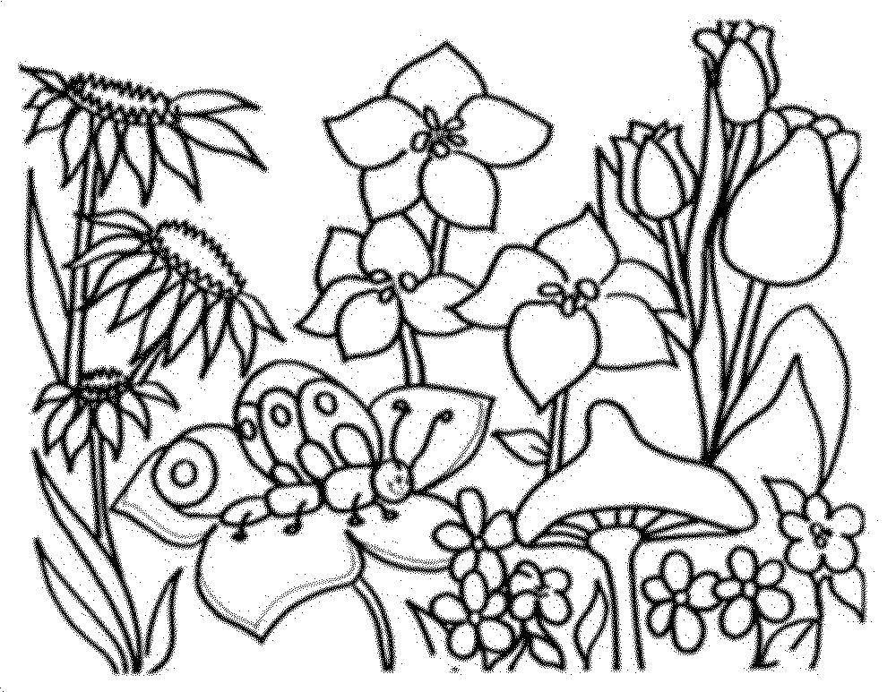 Раскраска Бабочка села на цветы Скачать Цветы.  Распечатать ,цветы,