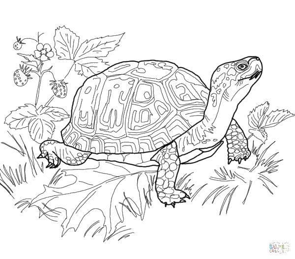 Раскраска Черепашка на траве Скачать Комиксы, Черепашки Ниндзя.  Распечатать ,черепашки ниндзя,