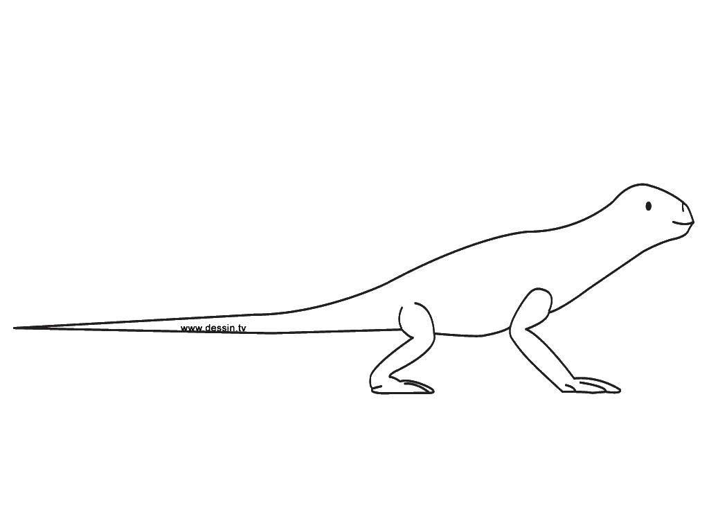 Раскраска Длинный хвост ящерки Скачать Рептилия, ящерица.  Распечатать ,рептилии,