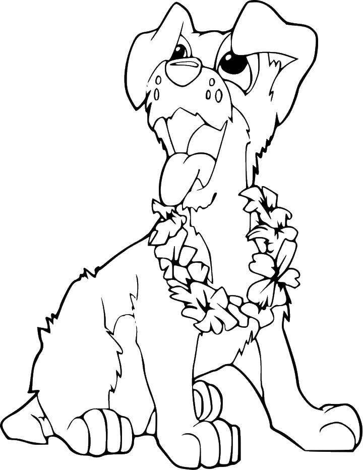 Раскраска Гавайский пес. Скачать Животные, собака.  Распечатать ,домашние животные,
