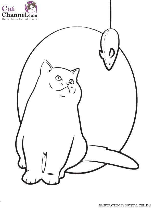 Раскраска Коты и котята Скачать ,Октонавты, мультфильм,.  Распечатать