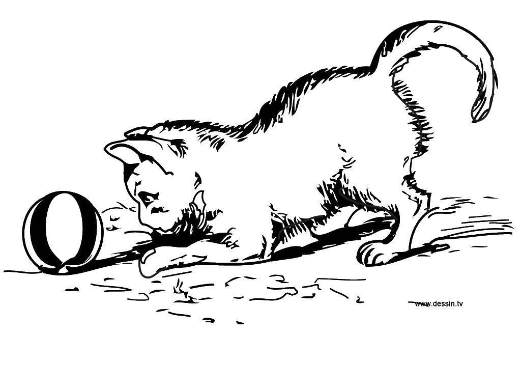 Раскраска Коты и котята Скачать Цифры, счёт, числа.  Распечатать ,прописи цифры,